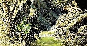 Craig Bone (Zimbabwean, b.1955) LEOPARDS BY A WATERFALL signed and dated [1986] lower right oil on canvas 50 by 90cm., 19.5 by 35.5in. Estimate -