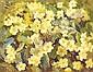 Geraldine M. O'Brien (b.1922) PRIMROSES signed lower right oil on canvas 36 by 46cm., 14 by 18in., Geraldine O'Brien, Click for value