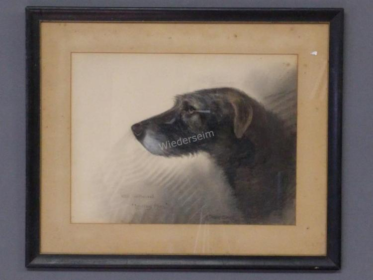 Irish Wolfhound Portrait by Reuben Ward Binks
