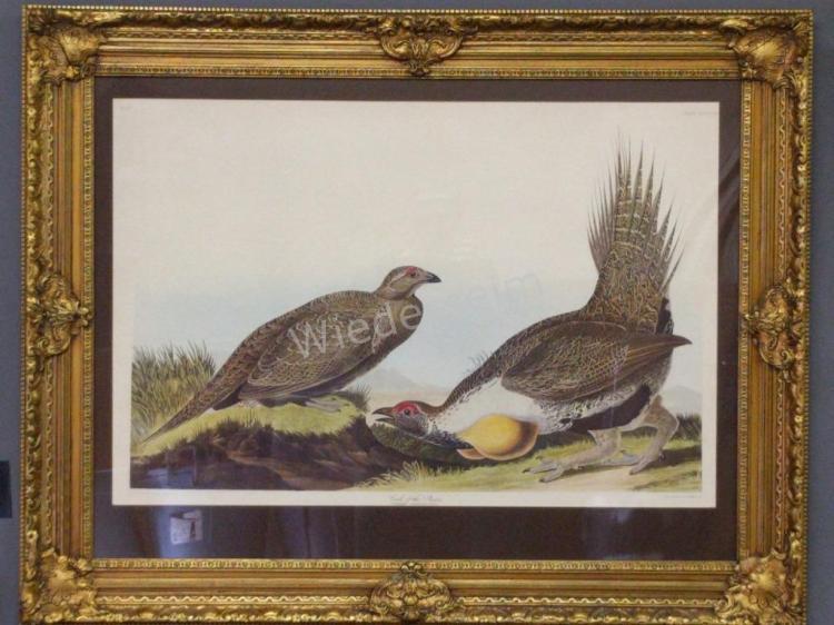 J.J. Audubon print