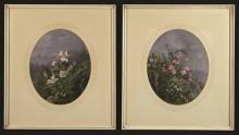 A Pair of Botanical Oil Paintings on Card (?) depicting wild flowers growing from rocky outcrops, 10¼ ins x 8¼ ins (26 cm x 21 cms), in oval mounts and glazed frames, 17 ins x 15 ins (43 cms x 38 cms).