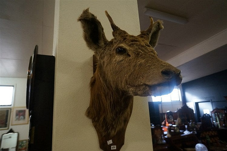 Coed nude taxidermy dating
