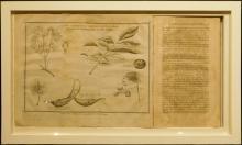 Book: Botanical Harmony Delineated, 1797