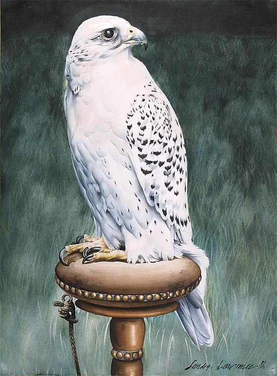 ‡ Sandra Lawrence (20th Century) White Gyr