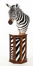 Excellent Shoulder-Mount Zebra on Zebra Skin Stand
