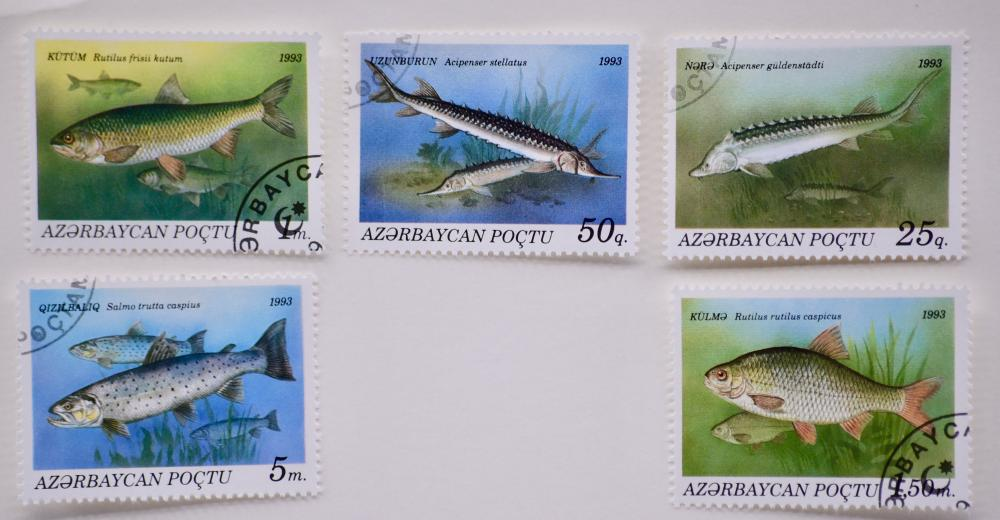 Caspian Sea Fish