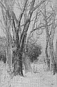 CHESTER LOOMIS, A.N.A., (1852-1924) Woodland Snow, wc, 9 x 7, s