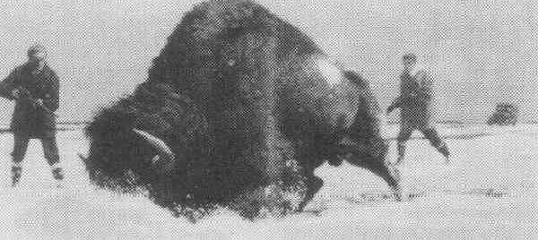 FRED LUDEKENS (1900-1982) Buffalo Hunt, gou, 9 x 20, s, d 1954, B1,!