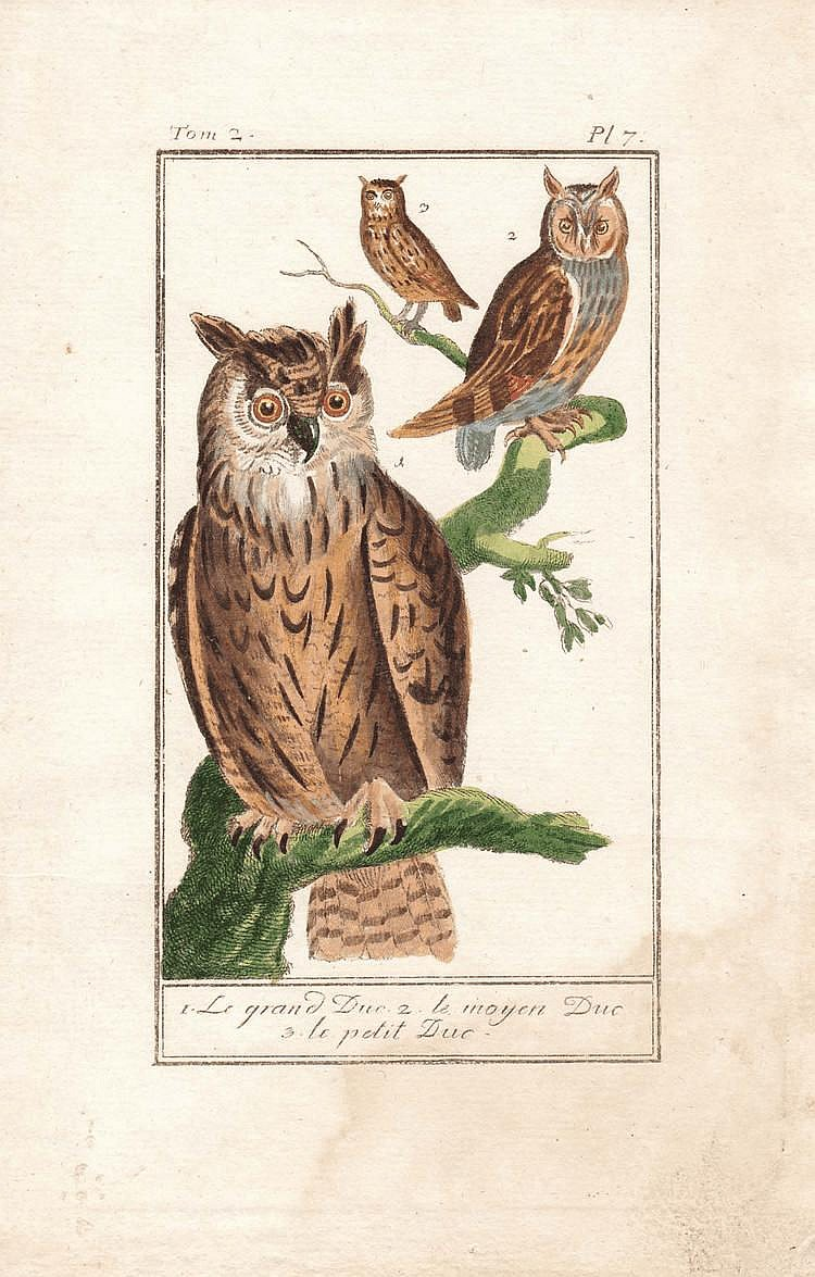 ZOOLOGICAL ILLUSTRATIONS II.