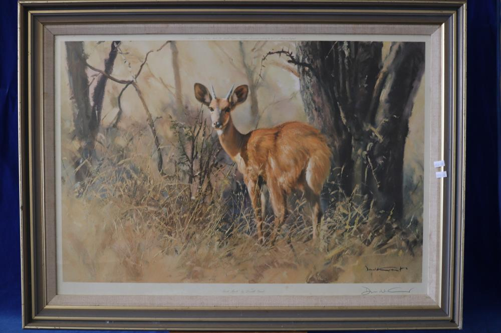 SIGNED & NUMBERED DEER PHOTO BY DONALD GRANT (BUSH BUCK)