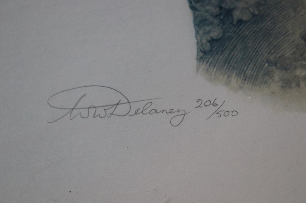 W.W. DELANEY LTD EDT 206/500 KOOKABURRAS