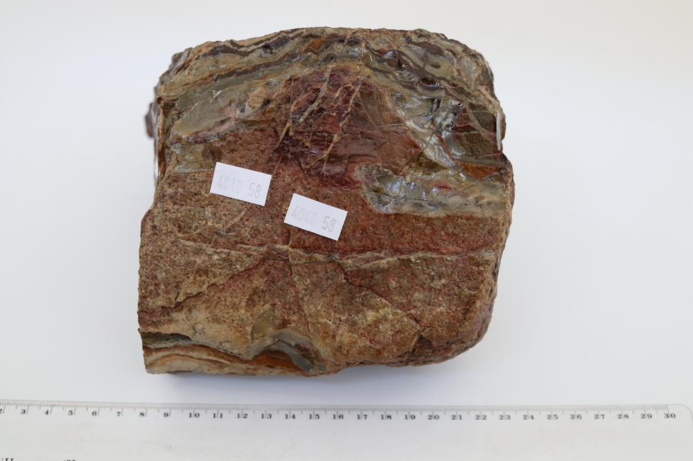 ANCIENT STONE FOSSIL FROM BROOME