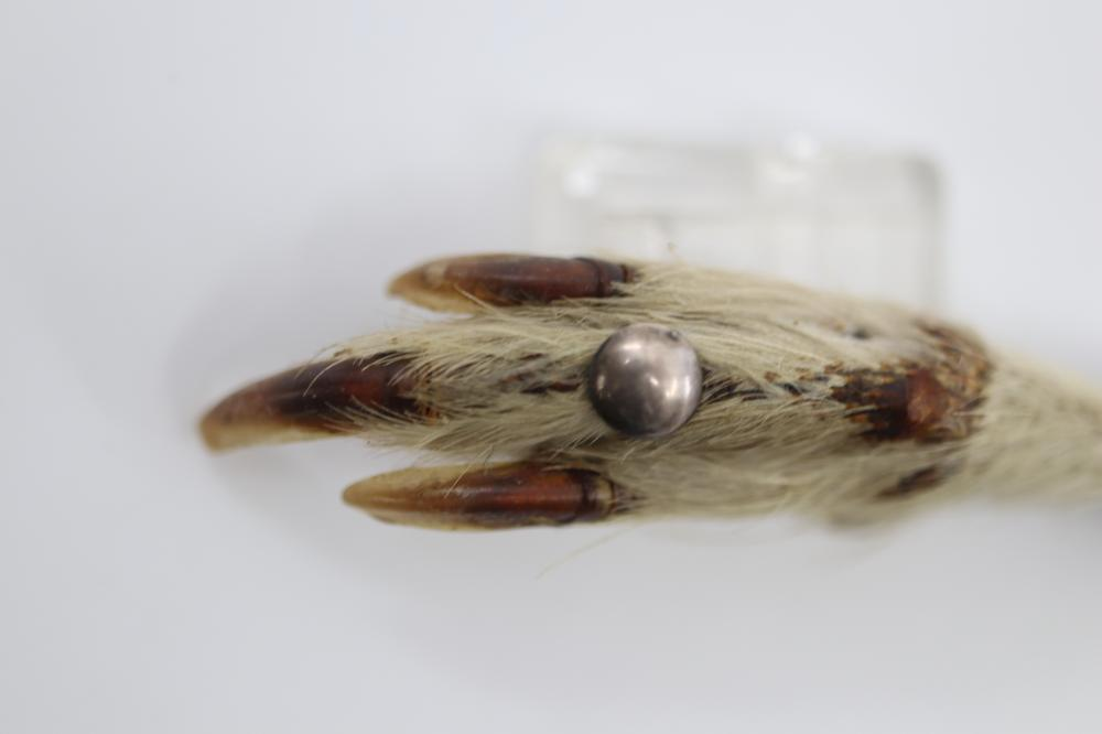 GROUSE FOOT BROOCH