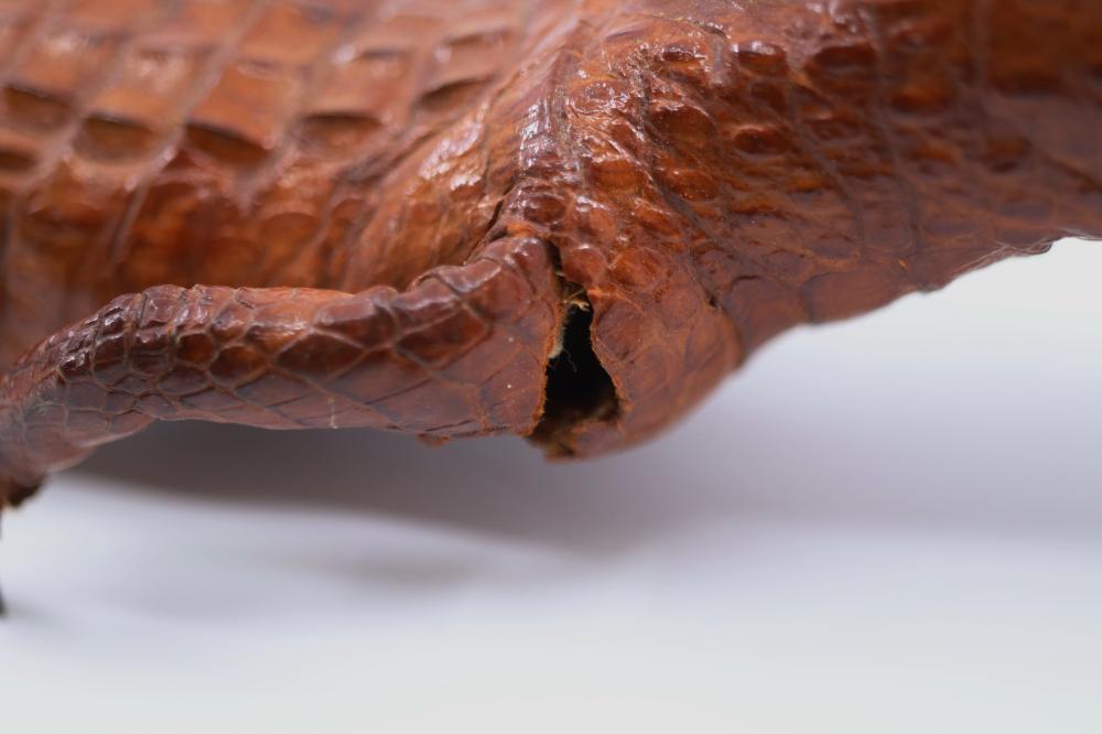 TAXIDERMY BABY CROCODILE (SOME LOSSES)