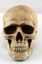 LIFE SIZE REALISTIC HUMAN SKULL COIN BANK PAINTED