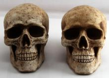 PAIR OF LIFE SIZE REALISTIC HUMAN SKULL COIN BANK