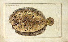 BLOCH (Marcus Elieser). Allgemeine Naturgeschichte der Fische. Berlin, 1782-1794. 6 parties (sur 12) avec 212 (sur 216) planches gravées.