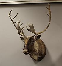 Caribou Mount, Rack 30