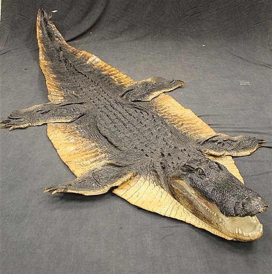 """Alligator full body cape. 11'4"""" nose to tail - Florida"""