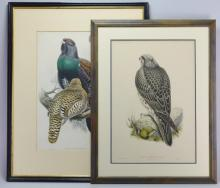19th Century Avian Lithographs
