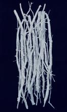 Jill Grimes, Arrangement II, 2013, oil on canvas, 52 x 32 inches