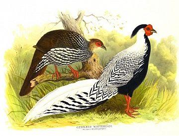 [Biology] The Bird Paintings of Henry Jones