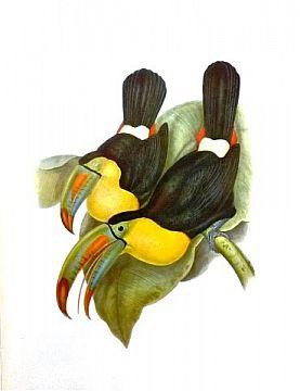 [Biology] Vogels van Europa / Azië / Nieuw-Guinea / Australië / Zuid-Amerika [Total 10]