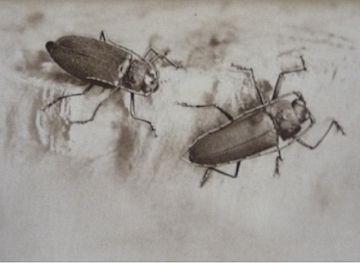 [Biology] Souvenirs Entomologiques [Total 10]