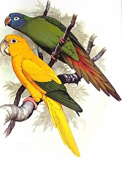 [Biology] Parrots of the World