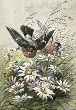 [Biology] Books on Birds and Invertebrates [Total 7]