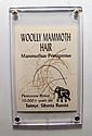 A lock of Woolly Mammoth Hair