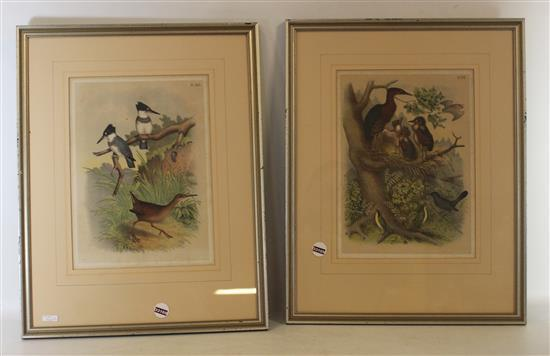 PAIR HAND COLORED BIRD PRINTS, 16.5