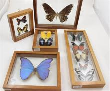 5 FRAMED BUTTERFLY DISPLAYS, 4.5