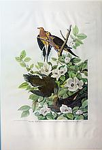 Audubon Aquatint Engraving, Turtle Dove