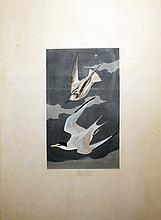 Audubon Aquatint Engraving, Lesser Tern