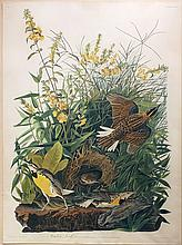 Audubon Aquatint Engraving, Meadow Lark