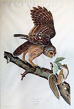 Audubon Aquatint Engraving, Barred Owl