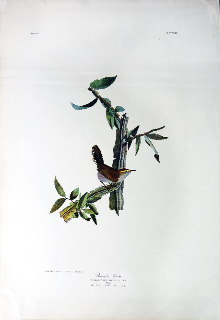 Audubon Bien Chromolithograph, Bewick's Wren