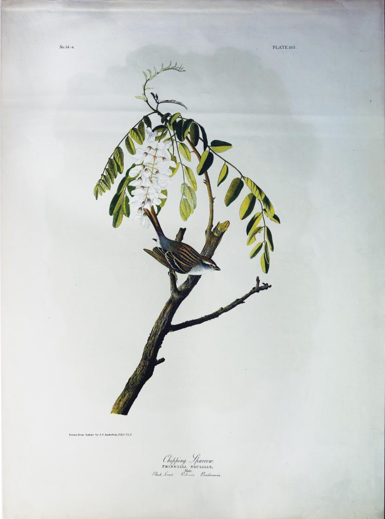 Audubon Bien Chromolithograph, Chirping Sparrow