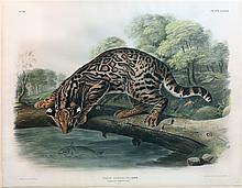 Audubon Quadrupeds, Imperial Folio, Ocelot