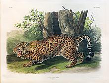 Audubon Quadrupeds, Imperial Folio, Jaguar