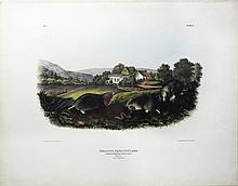 Audubon Quadrupeds, Imperial Folio, Common American Shrew Mole