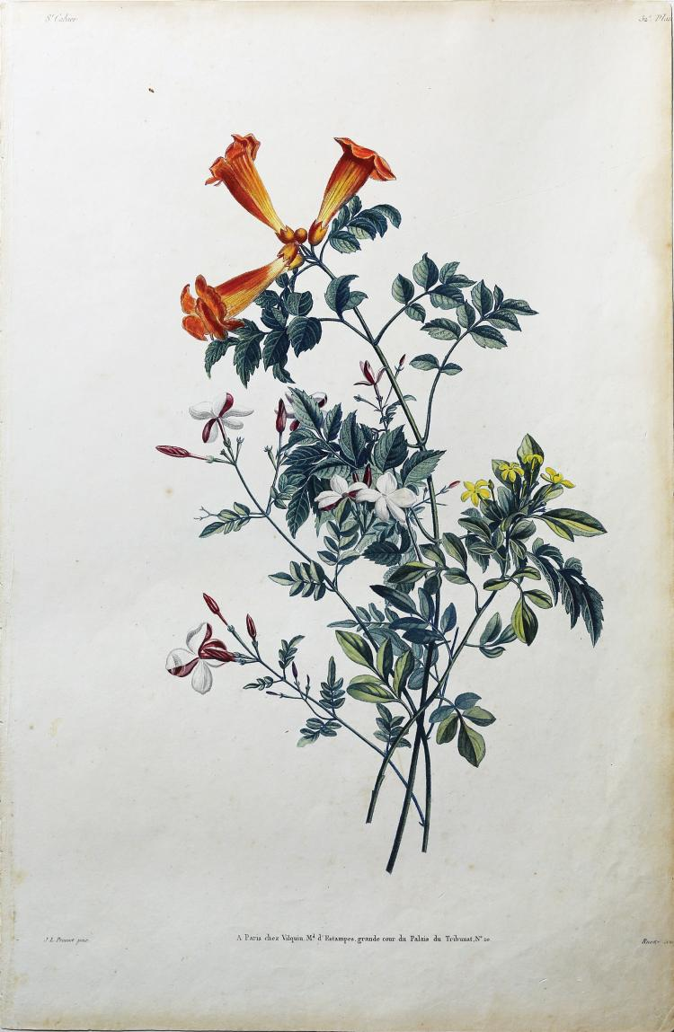 Group of Jasmin by Jean Louis Prevost