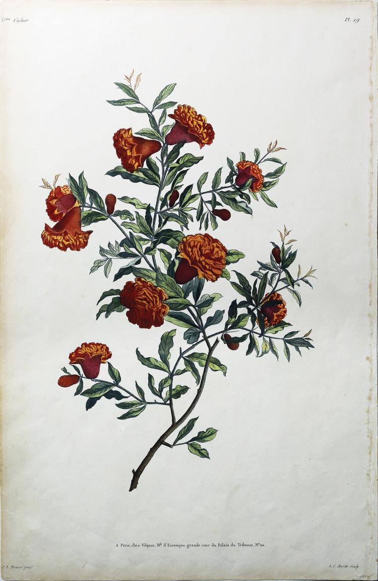 Pomegranate Flower by Jean Louis Prevost