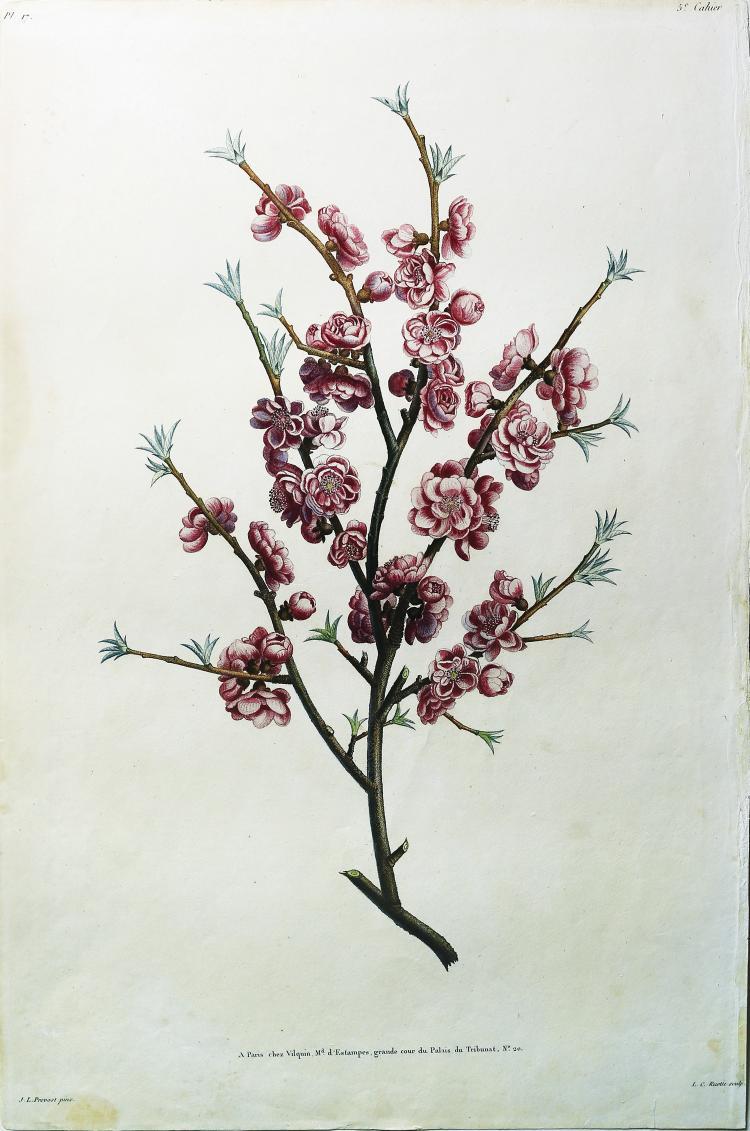 Peach Blossom by Jean Louis Prevost