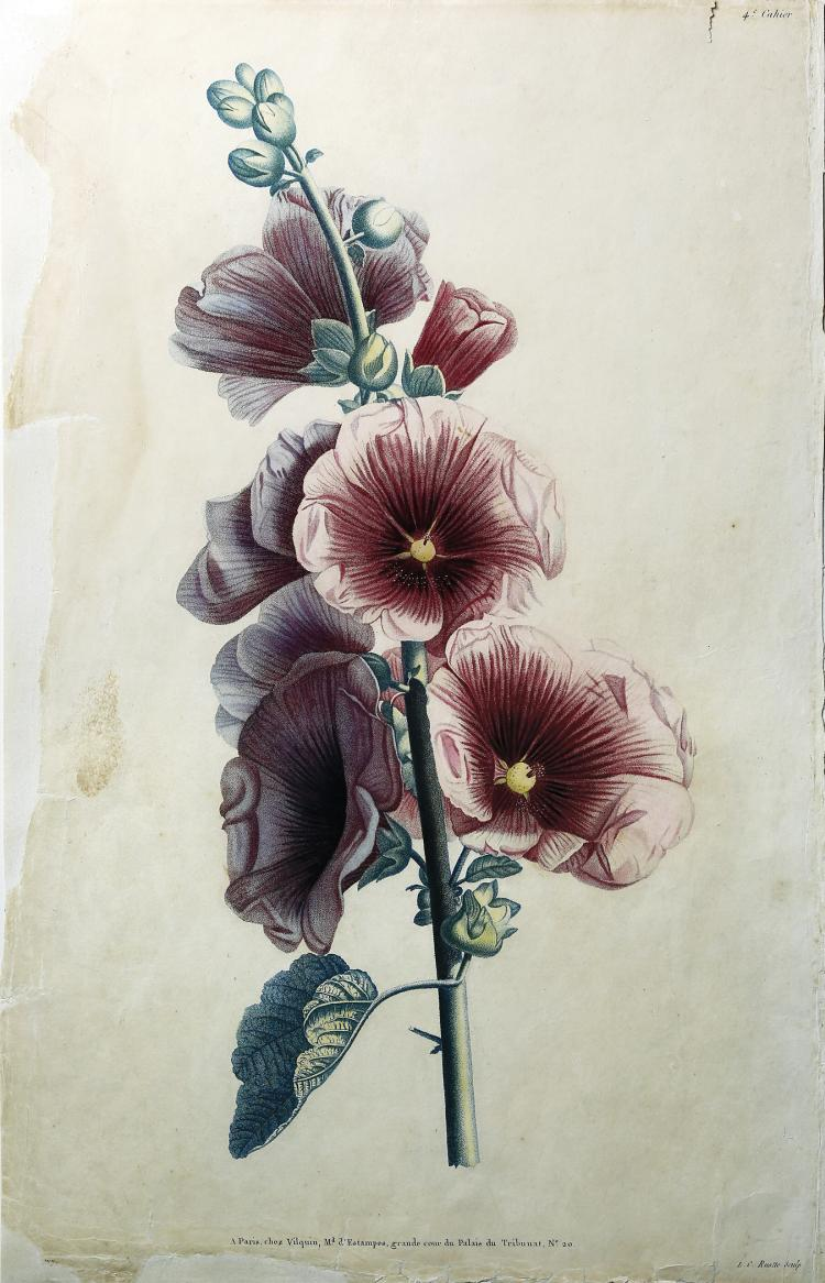 Hollyhock by Jean Louis Prevost