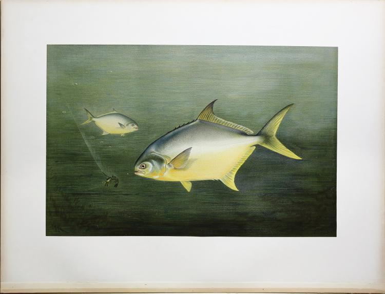 Spectacular Chromolithographs of Game Fish by Kilbourne