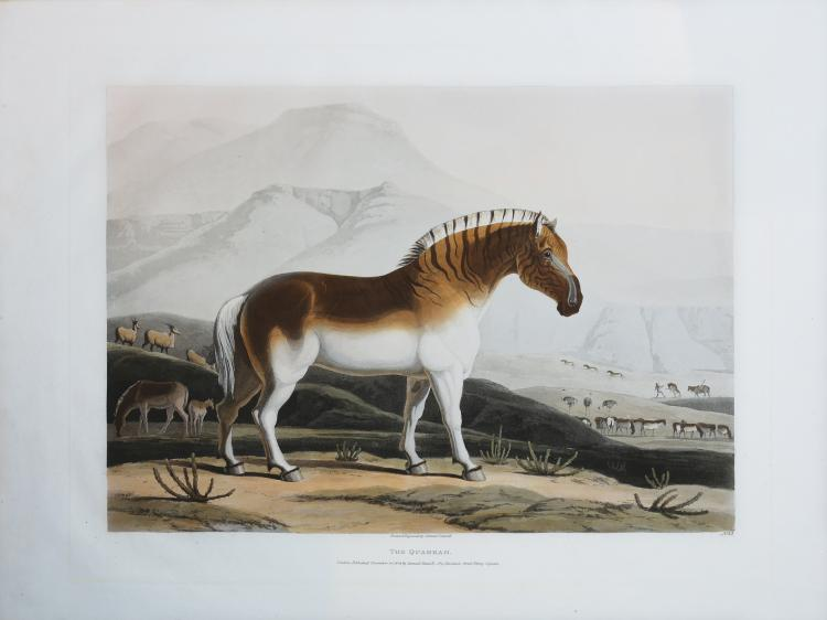 Daniell Aquatint Engravings of South Africa