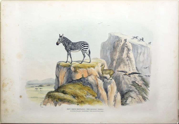 Harris Lithographs of South African Game and Wild Animals
