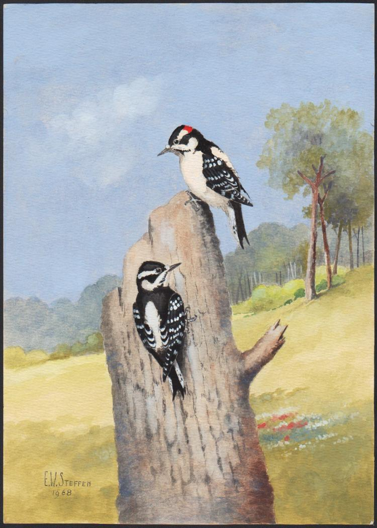 Steffen Watercolor of Downy Woodpecker